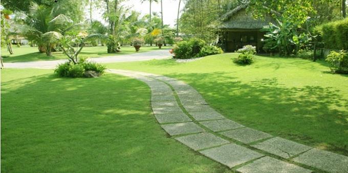 Dịch vụ trồng cỏ sân vườn