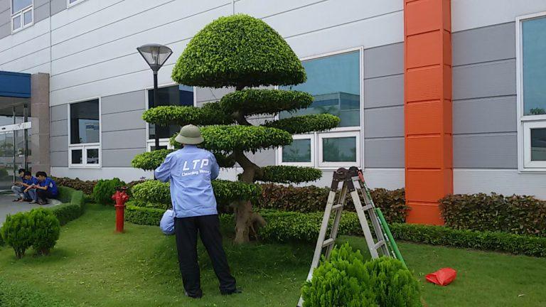 Dịch vụ chăm sóc cây xanh tại Bình Dương