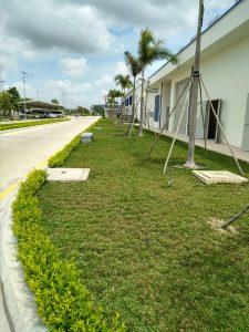 Dịch vụ trồng cỏ sân vườn tại Bình Dương
