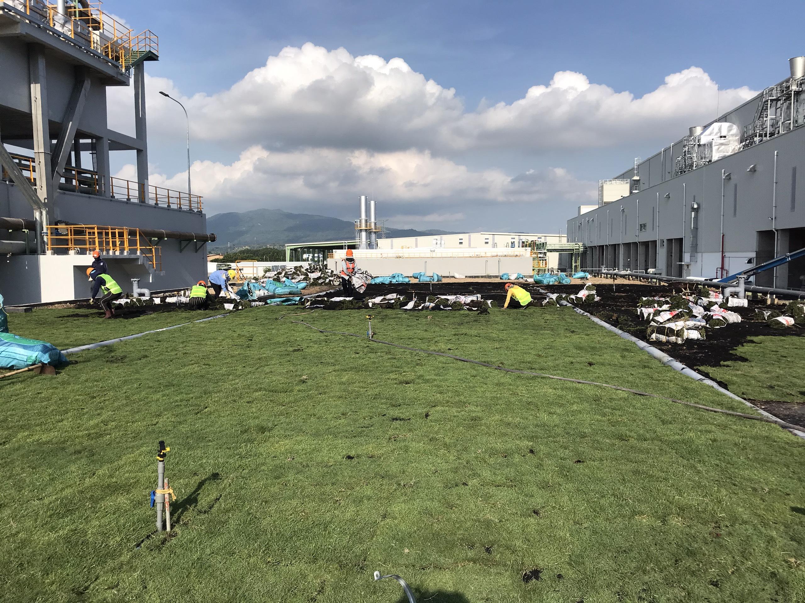 Dịch vụ trồng cỏ tại Mỹ Phước Bình Dương